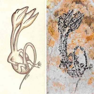 Fóssil de Diapsid (Choristodera) da Formação Yixian.