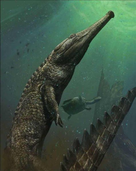 machimosaurus-rex.jpg.imgw.1280.1280