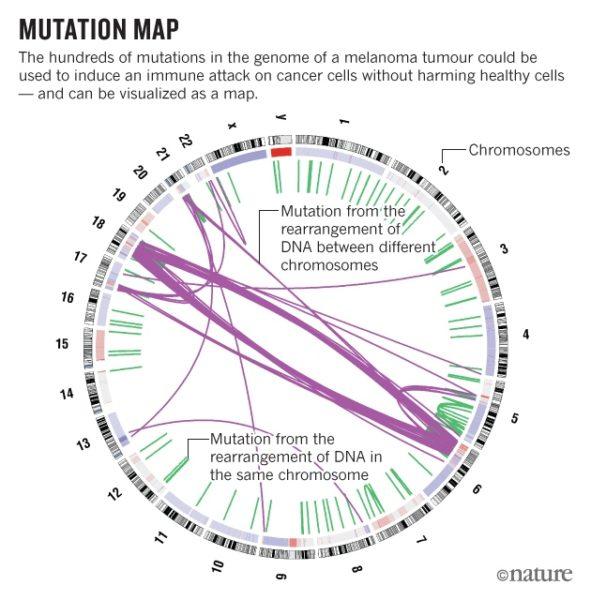 nature-cancer-mutation-15-dec-2016