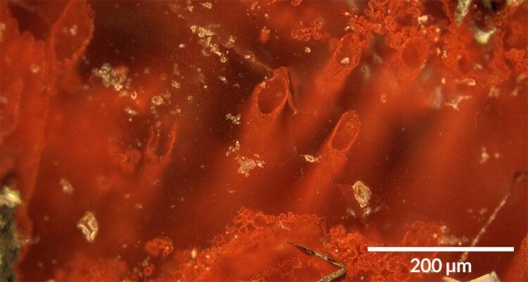 Sinais de vida. Nas rochas que sobraram de antigas fontes hidrotermais, esses tubos microscópicos de hematita, um minério de ferro, podem ser remanescentes de micróbios primitivos.
