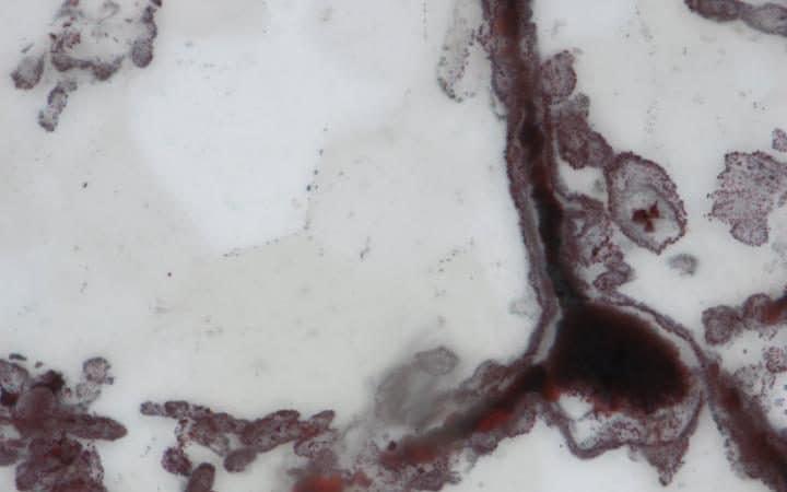 fossil1-large_trans_NvBQzQNjv4BqT9UsYpwIZ13hLjh3givJlPsHquXf6t9Eb7tuKGVlU2A
