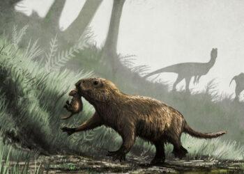 Os extintos Kayentatherium, que viveram no início do jurássico, eram provavelmente ativos à noite. (Créditos da imagem: Mark Witton).