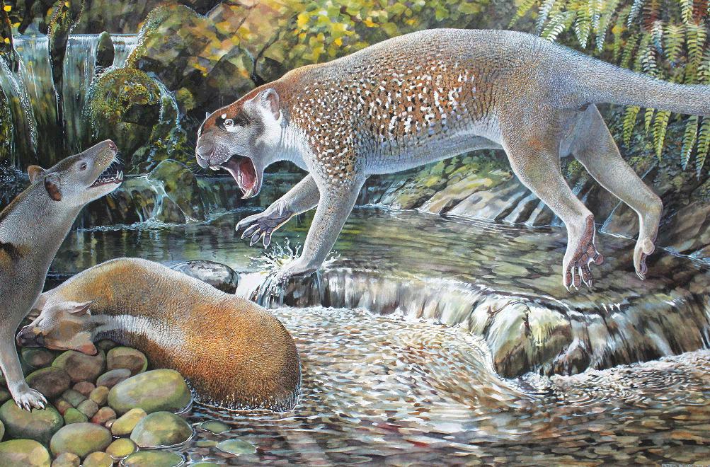 Reconstrução artística de um espécime de Wakaleo schouteni  desafiando outro da espécie Nylacinid Nimbacinus dicksoni por uma carcaça de canguru em uma floresta do Oligoceno, em Riversleigh, um sítio arqueológico de renome em Queensland, Austrália (ilustração do artista Peter Schouten).