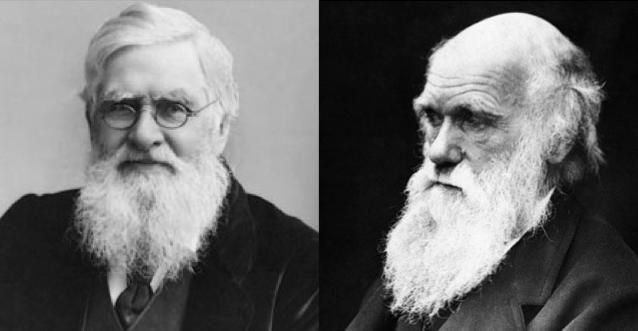 Alfred Russel Wallace (à esquerda) e Charles Darwin, os pais da teoria da evolução (Imagens: Wikimedia Commons)