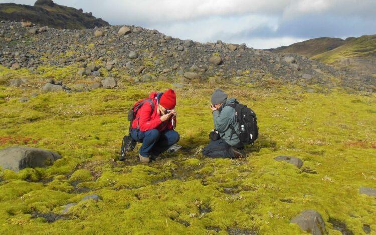 A vida primitiva na terra se assemelhava a solos como este campo da lava na Islândia. A co-autora Sylvia Pressel aparece à direita na foto. Crédito: Paul Kenrick