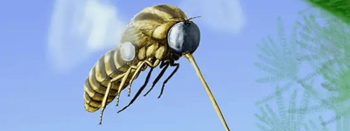 Archocyrtus kovalevi se alimentado com o néctar de gimnospermas, segundo estudo publicado Gondwana Research. Crédio: Khramov et al / Dmitry Bogdanov)