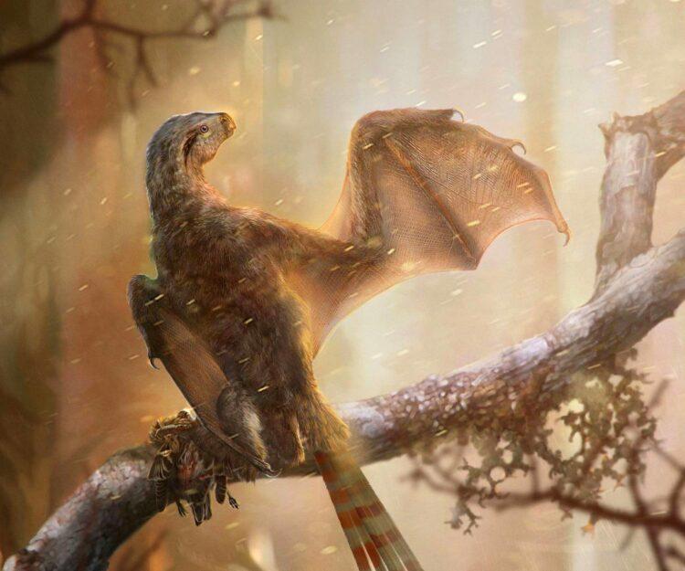 Ambopteryx longibrachium. Image credit: Chung-Tat Cheung & Min Wang / Institute of Vertebrate Paleontology and Paleoanthropology, Chinese Academy of Sciences.