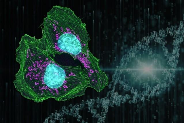 https://socientifica.com.br/wp-content/uploads/2019/06/cancer-tratamento.jpg