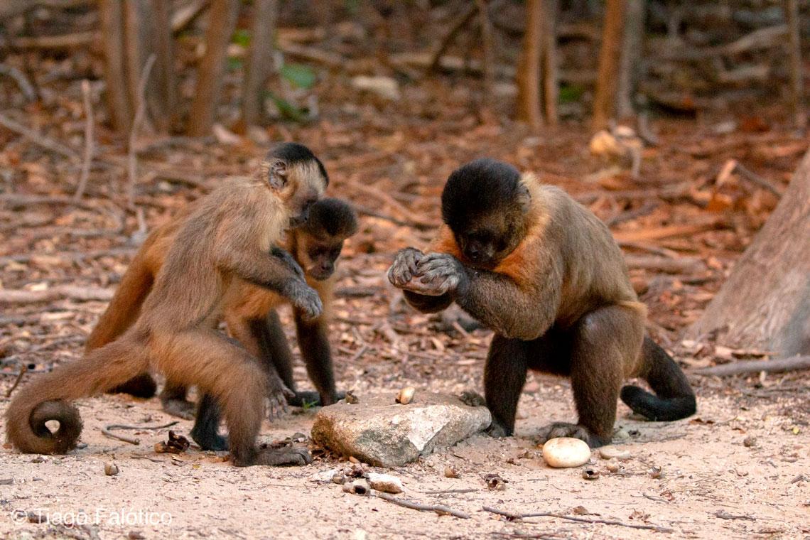https://socientifica.com.br/wp-content/uploads/2019/06/macacos.jpg