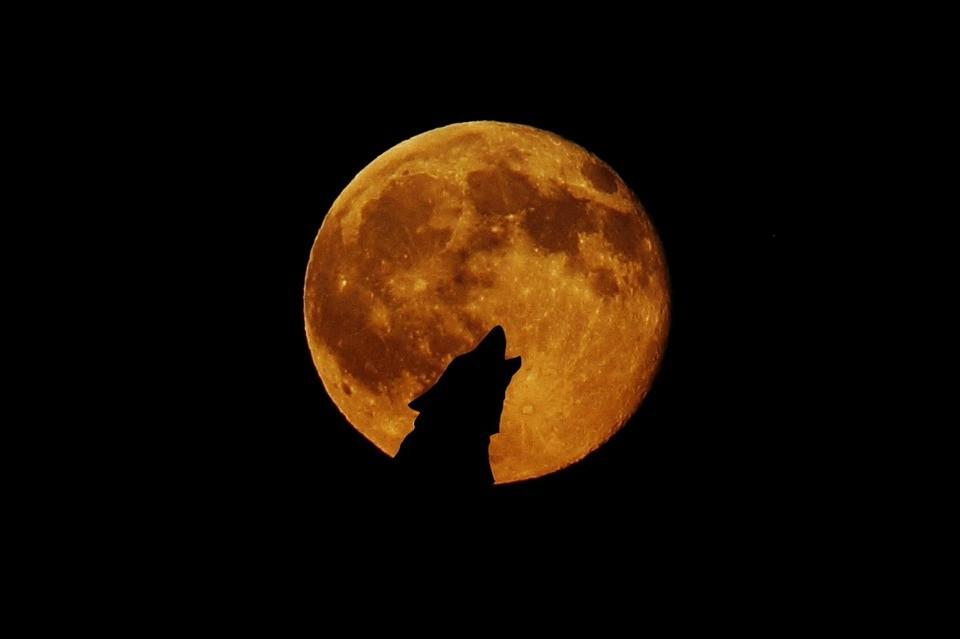https://socientifica.com.br/wp-content/uploads/2019/07/animais-estranhos-durante-eclipse.jpg