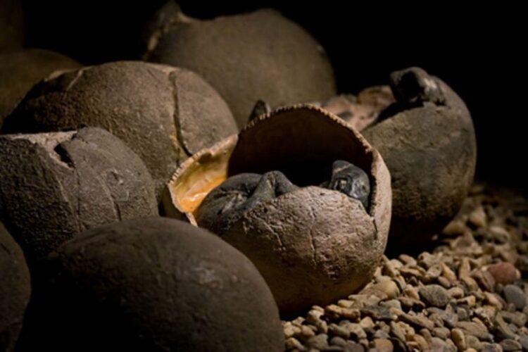 Imagem representativa dos ovos de dinossauro. Crédito: KtD / Adobe