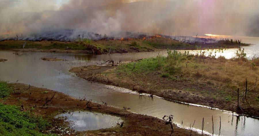 https://socientifica.com.br/wp-content/uploads/2019/08/floresta-amazônica-pode-entrar-em-colapso.jpg