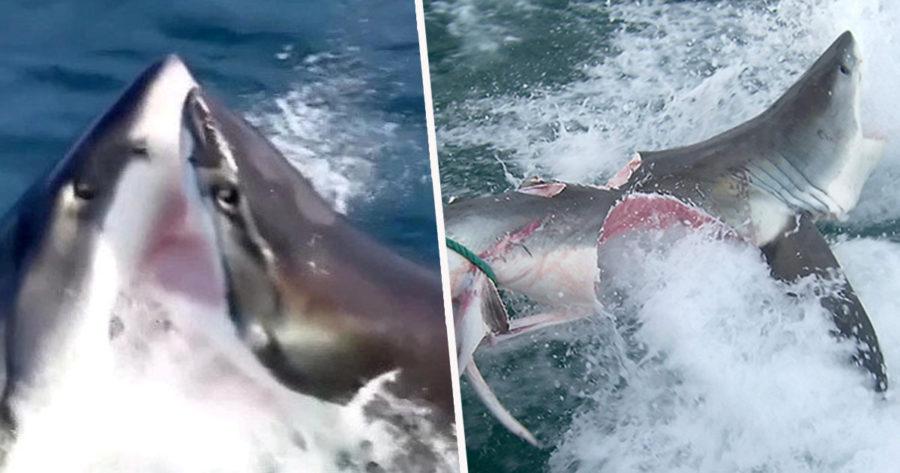 https://socientifica.com.br/wp-content/uploads/2019/09/Ataque-de-tubarão-capa.jpg