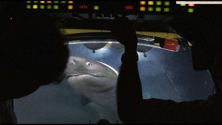 Tubarões encurralam pesquisadores e atacam submarino
