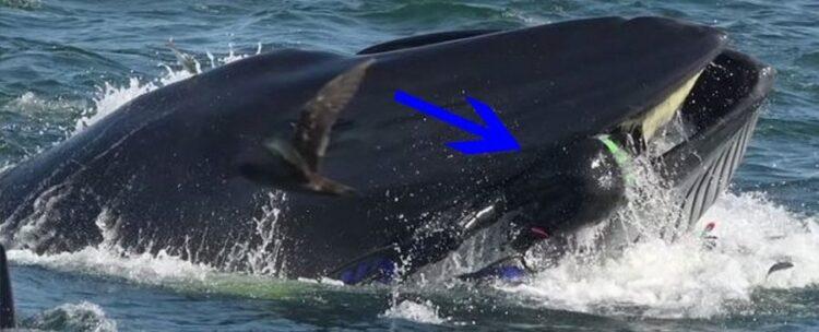 Foto tirada por Heinz Toperczer. (YouTube / Barcroft Animals; ScienceAlert)
