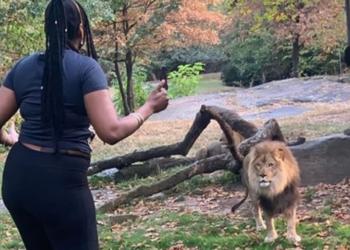 O vídeo da mulher imprudente com o leão foi postado no Instagram e  mostra ela acenando e dançando diante do animal, enquanto ele olha para ela sem entender.