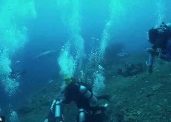 Mergulhadores em Bali ficaram aterrorizados ao se depararem com um grande tubarão branco de cinco metros de comprimento.