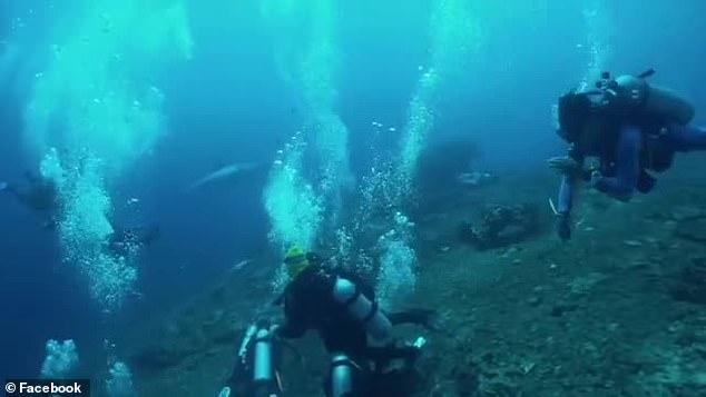 Aterrorizante Tubarão Branco De Cinco Metros Persegue