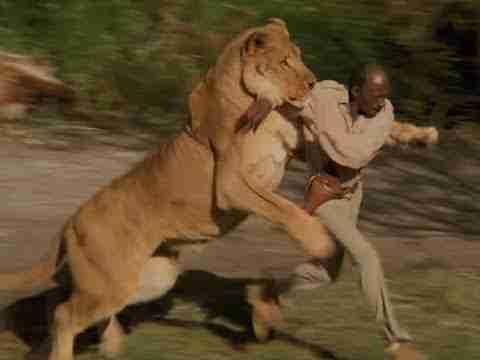 https://socientifica.com.br/wp-content/uploads/2019/10/lion-attack-videos-on-humans-lion-attacks-human-eating-man-ngc-bbc-south-africa.jpg