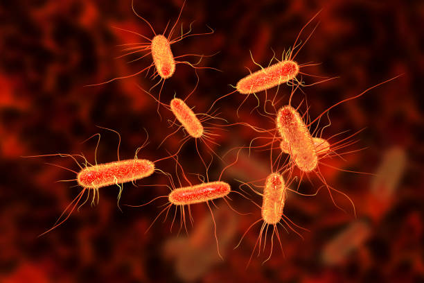 https://socientifica.com.br/wp-content/uploads/2019/11/Bactéria.jpg