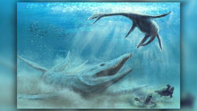 Os pliosauros eram predadores de ápice nos oceanos jurássicos. (Imagem: © Ilustração de Piotr Szczepaniak, cortesia de Daniel Tyborowski)
