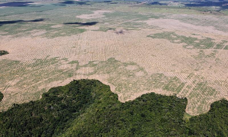 https://socientifica.com.br/wp-content/uploads/2019/11/Desmatamento-3.jpg