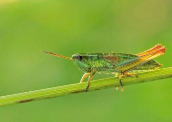 O grupo de insetos inclui 75% dos seres vivos que conhecemos (Martin Fellendorf, Universität Ulm)