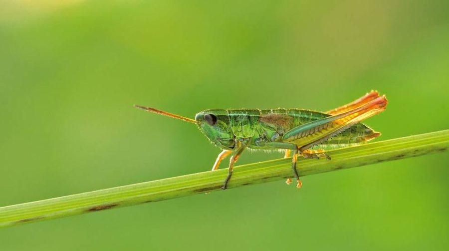 https://socientifica.com.br/wp-content/uploads/2019/11/desaparecimento-de-insetos.jpg