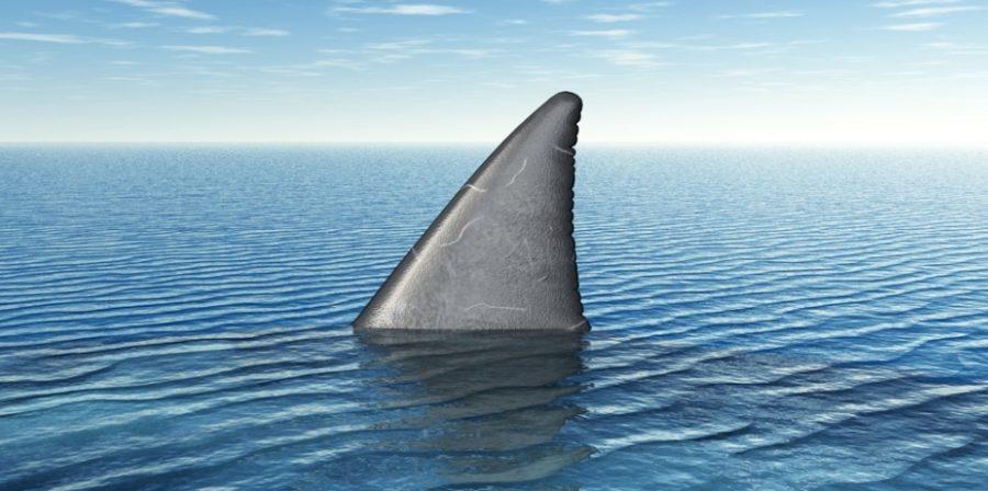 https://socientifica.com.br/wp-content/uploads/2019/12/Pior-ataque-de-tubarões-1-scaled.jpg