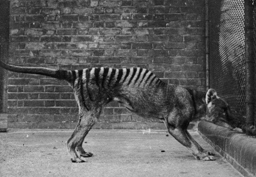 Cientistas recontaram as espécies extintas da Austrália. O resultado é devastador