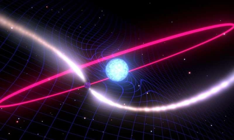 Representação artística de uma estrela de nêutrons que gira rapidamente e de uma anã branca que causa uma distorção no tecido do espaço-tempo em torno de sua órbita. Crédito: Mark Myers, Centro de Excelência OzGrav ARC.