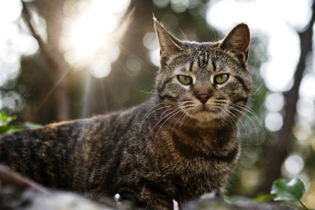 wild cat in a field on sunset  backlight