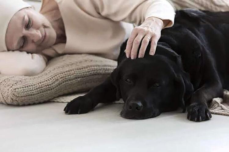 Pesquisadores usam a toxina mortal para curar cães com câncer de bexiga, o tratamento também se mostrou eficaz em eliminar células cancerígenas humanas.