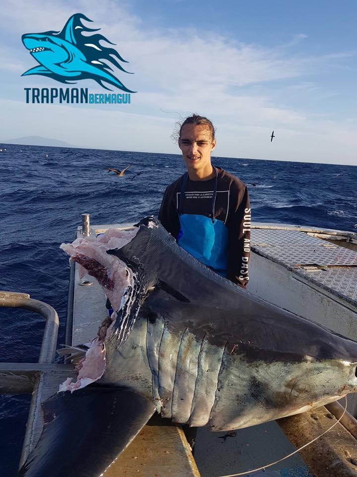 Pescadores encontraram uma cabeça de tubarão de 104 kg que teve seu corpo comido por um predador ainda desconhecido. O achado mostra que o oceano não está para brincadeira, mesmo com os maiores predadores.