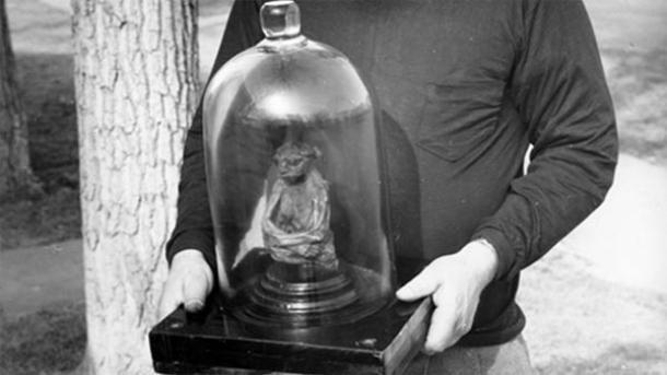 Bob David segura a múmia da Montanha de São Pedro, por volta de 1950. (Imagem: Centro de História Ocidental da Casper College)