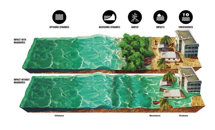 Esta ilustração mostra o impacto do aumento de tempestades na infraestrutura costeira e nas pessoas com e sem manguezais. (Crédito: © Banco Mundial)