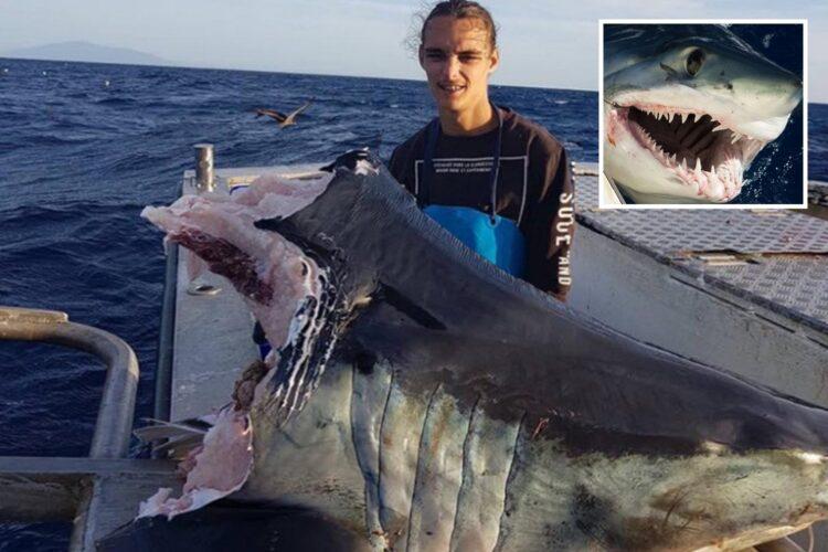 Só a cabeça do tubarão pesava 104 kg. (Imagem: Trapman Bermagui)