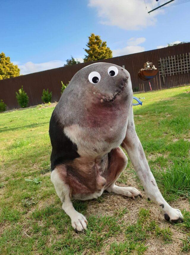 """As pessoas estão tendo dificuldade em entender este cachorro na foto, e alguma até tentaram """"corrigi-lo"""" usando o photoshop."""