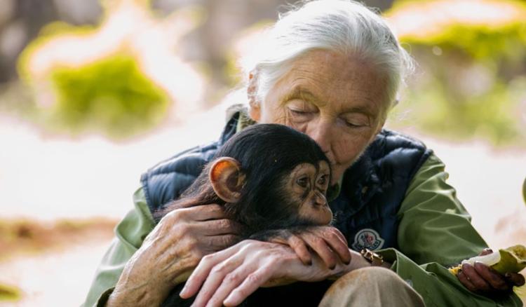Jane Goodall. (Imagem: Getty)