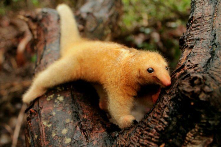 Um filhote de tamanduaí, o menor tamanduá do mundo. (Imagem: Karina Theodoro Molina)