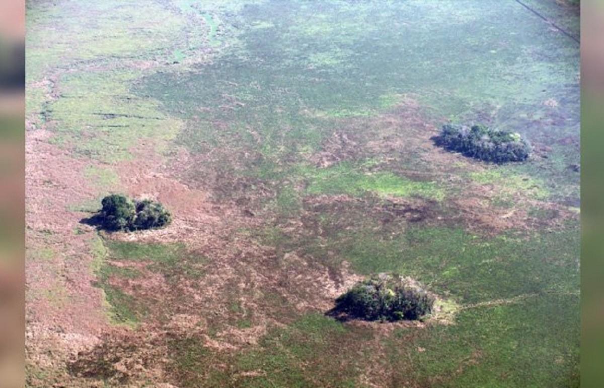 Agricultura há 10 mil anos na Amazônia