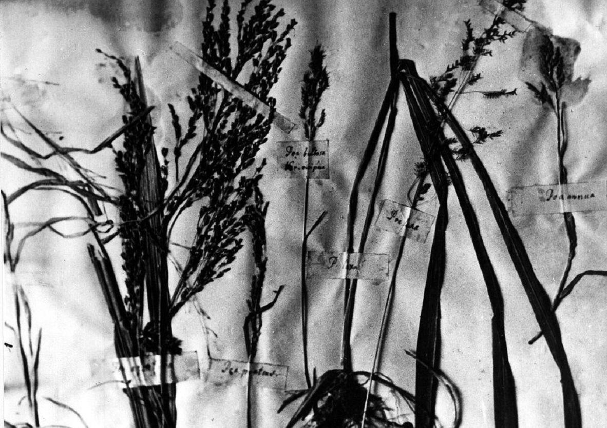 herbário de Mendel
