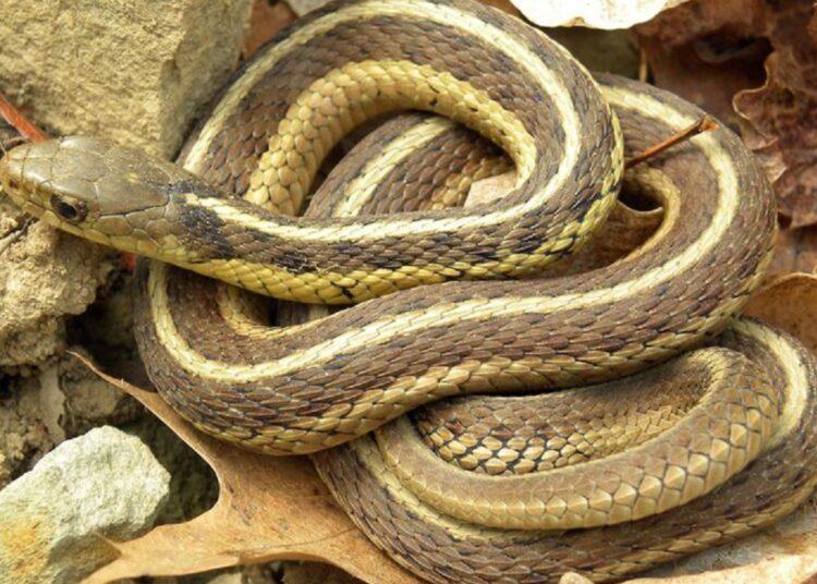 cobras de sangue frio