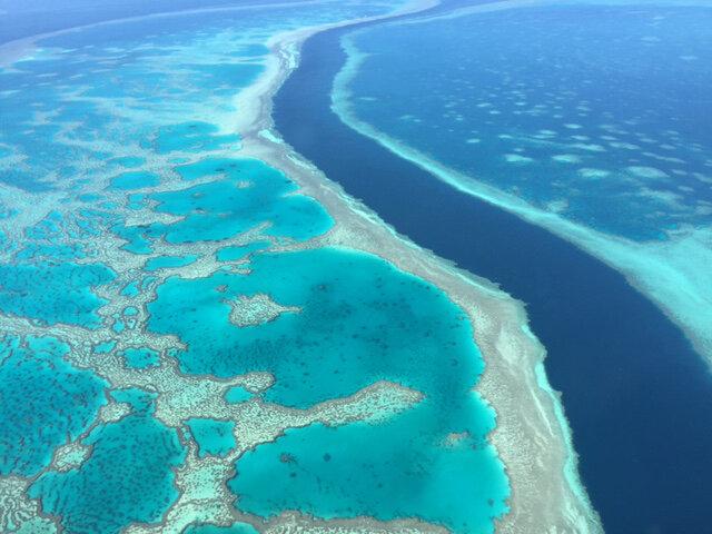 Coral resistente ao calor