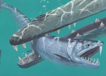Fósseis de anchovas gigantes