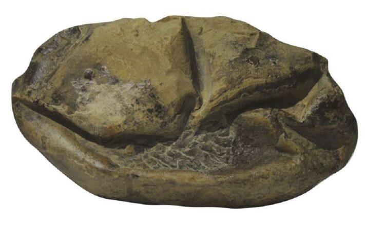 Fóssil misterioso encontrado na Antártida era na verdade um ovo