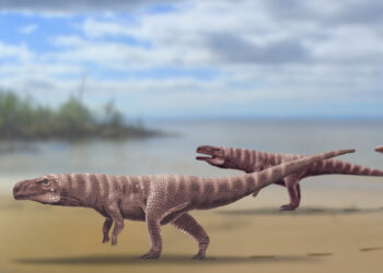 Esse parente antigo dos crocodilos atuais vivia no atual território da Coreia do Sul. (Imagem: Anthony Romilio)