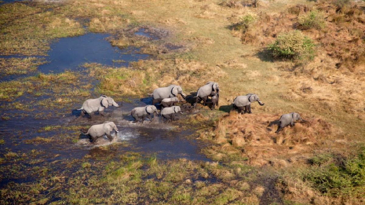 Mais de cem elefantes desapareceram misteriosamente na Botswana