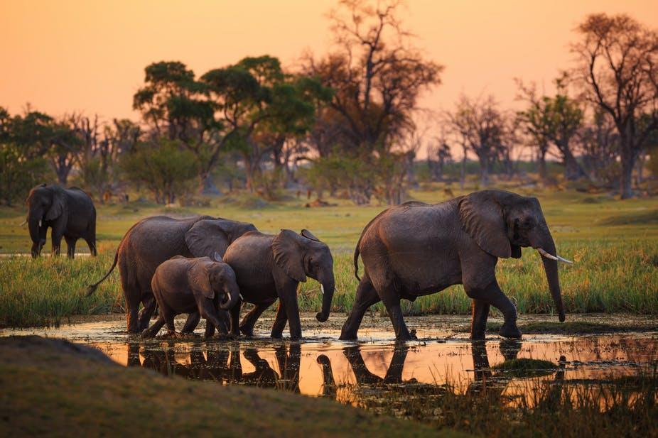 elefantes desapareceram misteriosamente