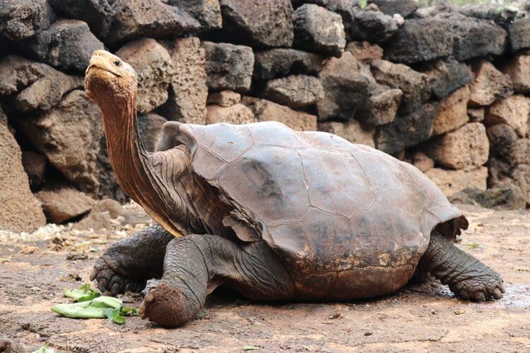 (Imagem: Galapagos National Park)